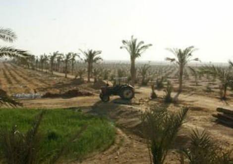 أهالي سهل الطينة يطالبون بإيقاف مزاد ٢٥ نوفمبر لحماية ٢١ ألف فدان
