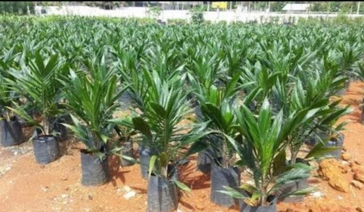 غانم يطالب بتشديد إجراءات الحجر الزراعي على فسائل النخيل المستوردة