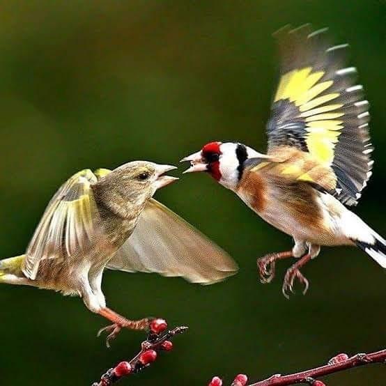 طيور وتغريدات