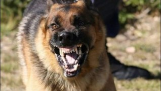 حزب المحافظين يطالب محافظ الغرببة بحملة ضد الكلاب المسعورة