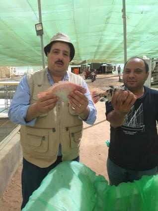 الزراعة تعلن عن أول إنتاج لمزرعة سمكية من وادي حوضين بشلاتين