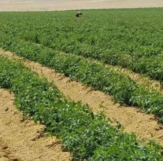 صغار المزارعين يطالبون بوقف بناء مدينة اسنا الجديدة للحفاظ على زراعات 1000 فدان