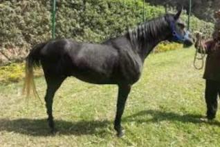 غانم يحذر من إنهيار محطة الزهراء للخيول نفوق 31 مهر والفرس الأصيل بـ 5 آلاف جنيه