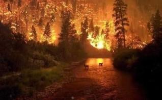 حرائق الامازون خطر يهدد البشرية