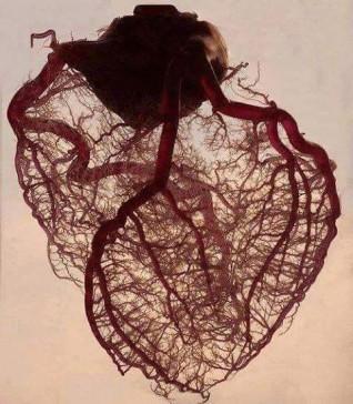 الإسكندرية تستقبل المؤتمر الأول لمركز جراحة الأوعية الدموية