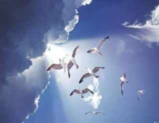رقص الطيور