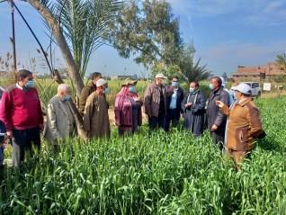 الزراعة تتابع محصول القمح في محافظة البحيرة