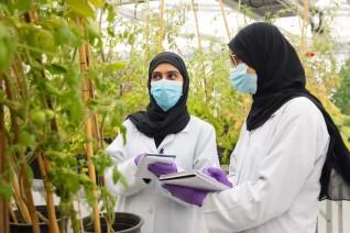 جامعة الإمارات: الاستفادة من الأنظمة الجينية للنباتات كمسار لتطوير الزراعة في الإمارات