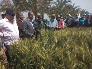 الزراعة: معهد المحاصيل الحقلية ينظم ورشة عمل القمح في محطة بحوث الجميزة بالغربية